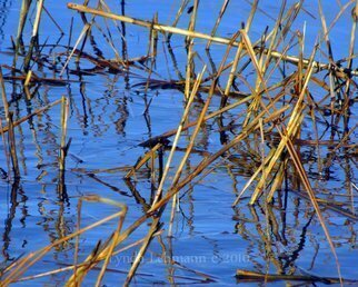 Color Photograph by Lynda Lehmann titled: Water Grass Design, created in 2010