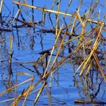 Water Grass Design, Lynda Lehmann
