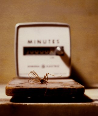 Tina West Artwork Minutes, 2009 Polaroid Photograph, Still Life