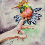 bird on the hand By Mojtaba A Delavar
