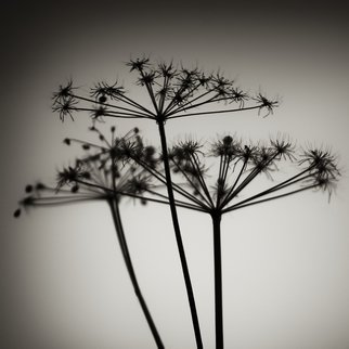 Jaromir Hron Artwork Brushes, 2011 Black and White Photograph, Floral