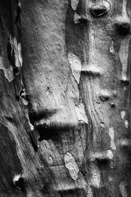 Jaromir Hron: Treeskin, 2012 Black and White Photograph