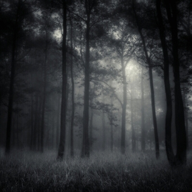 Jaromir Hron Artwork deep forest, 2010 Black and White Photograph, Nature