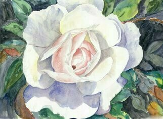 Mary Jean Mailloux: 'an irish rose', 2017 Watercolor, Botanical. Artist Description: so perfect in every way, this lovely rose captured my imagination. ...