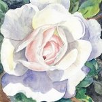 an irish rose By Mary Jean Mailloux