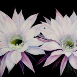 Mary Jean Mailloux: 'cactus flowers', 2014 Oil Painting, Floral.