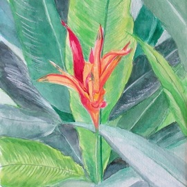 common bird of paradise  By Mary Jean Mailloux