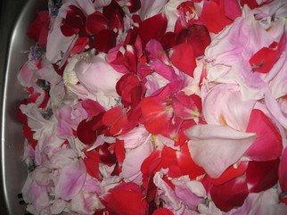 Artist:  Malke - Title: Petals - Medium: Color Photograph - Year: 2010