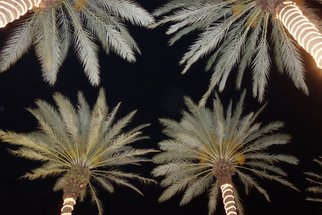 Marcia Treiger Artwork Palms with Personality, 2014 Color Photograph, Abstract Landscape