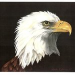 Eagle Eye By Marcia Collins