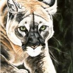 On The Prowl By Marcia Collins