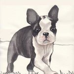 Boston Terrier pup 1 By Carolyn Alston Thomas