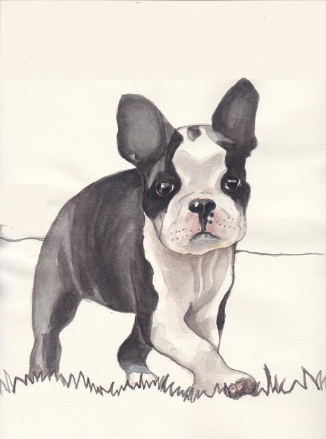 Carolyn Alston Thomas  'Boston Terrier Pup 1', created in 2013, Original Painting Acrylic.