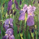 Patch of Iris By Carolyn Alston Thomas