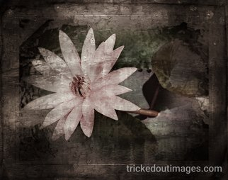 Mark Charles Fox: 'Jaipur Lotus', 2017 Photography, Floral. Artist Description: Printed on Platinum paper stock. Luster or Matte available on request. Other sizes available on request. trickedoutimages. com...