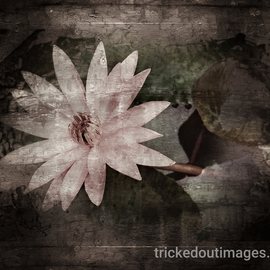 Mark Charles Fox: 'Jaipur Lotus', 2017 Color Photograph, Floral. Artist Description: Printed on Platinum paper stock. Luster or Matte available on request. Other sizes available on request. trickedoutimages. com...
