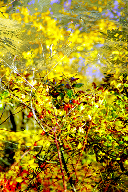 Color Photograph by Mary Mansey titled: Autumn, created in 2009
