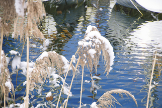 Color Photograph by Mary Mansey titled: Roseaux Hiver, created in 2008
