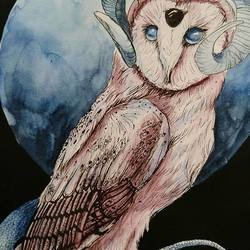 , Barn Owl, , Not For Sale