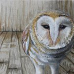 Barn Owl By Melissa Burgher