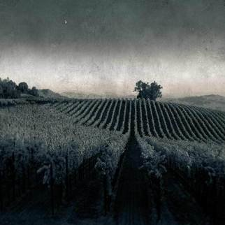 Michael Regnier: 'Moonlight in the Vineyard', 2010 Black and White Photograph, Landscape.    vineyard, vineyards,   ...
