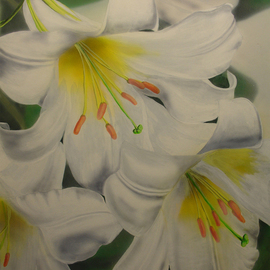 Gary Mishko: 'White Delight', 2010 Acrylic Painting, Floral. Artist Description:  Acrylic on illustration board. Lillys with faded background  ...