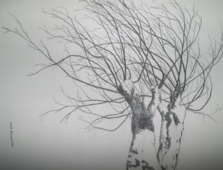 Guy Octaaf Moreaux: 'Knotty willows', 2009 Charcoal Drawing, Trees.  Knotty willows are common in Belgium. this one is snowed on. Regularly one has to cut the branches, this way it grows longer and from there the formation of knots. ...