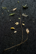 - artwork autumn-1297421389.jpg - 2010, Photography Color, undecided