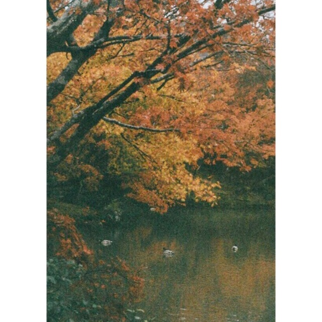 Moriko Do  'Autumn Lake In Kyoto Japan', created in 2017, Original Photography Color.