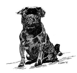 Michael Garr: 'blackpug', 1997 Pen Drawing, Dogs. A present to our friend Tony who raises pugs...
