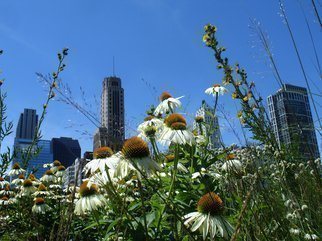 Color Photograph by Nancy Bechtol titled: Garden MilleniumPark Chicago, created in 2008