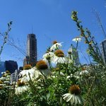 Garden MilleniumPark Chicago By Nancy Bechtol