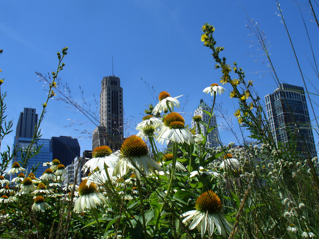 Nancy Bechtol  'Garden MilleniumPark Chicago', created in 2008, Original Photography Mixed Media.