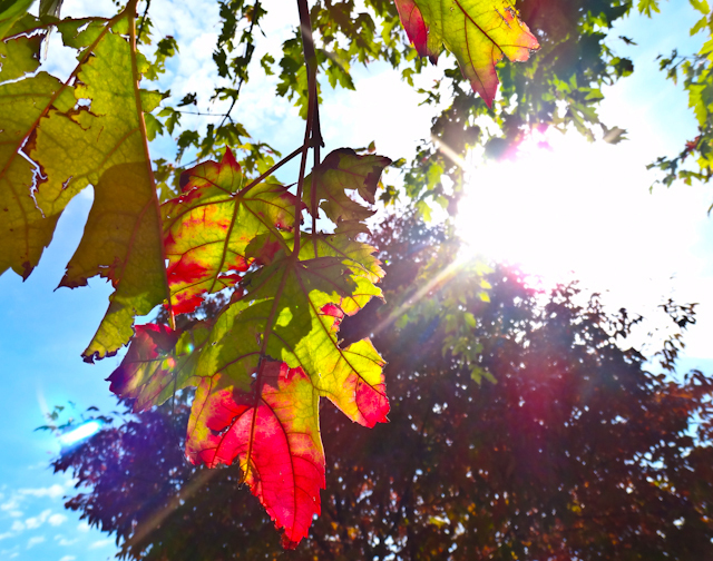 Nancy Bechtol  'Leaves Rally To Sun', created in 2012, Original Photography Mixed Media.