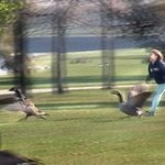Wild Goose Chase By Nancy Bechtol