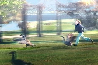 Nancy Bechtol Artwork Wild Goose Chase, 2010 Color Photograph, Animals
