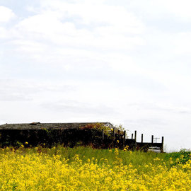 Yellow field country