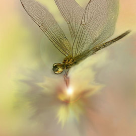 Nancy Bechtol Artwork dragon fly glow, 2008 Other Photography, Healing