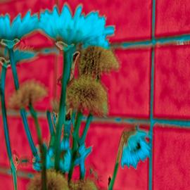 intense flowers El Cid