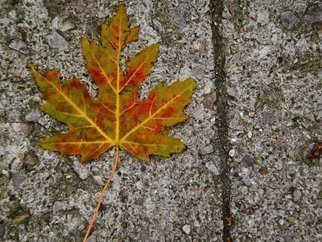 Nancy Bechtol: 'leaf first fall', 2012 Color Photograph, Floral. Artist Description: fall, shadow, leaf embossed, cement...