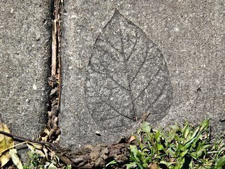 Nancy Bechtol: 'leaf in cementurban myth', 2012 Color Photograph, Urban.  fall, shadow, leaf embossed, cement ...