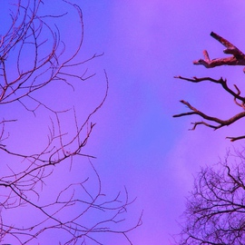 Nancy Bechtol: 'magenta skys', 2008 Other Photography, Sky. Artist Description:  intense magenta reaches the branchesdigital photo/ art this image sizes are variable up to 30