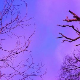 magenta skys