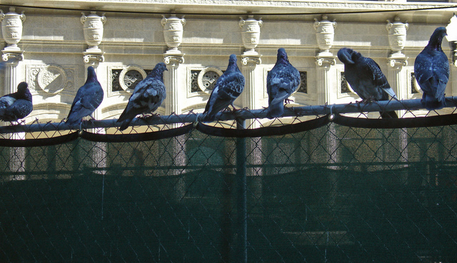 Nancy Bechtol  'Pigeons Roosting Citystyle', created in 2008, Original Photography Mixed Media.