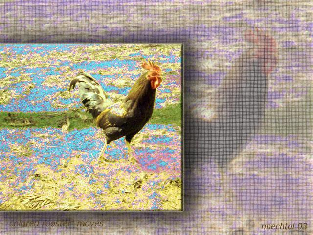 Nancy Bechtol  'Rooster Textures', created in 2003, Original Photography Mixed Media.