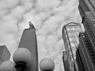 Nancy Bechtol: 'seagull and buildings', 2013 Black and White Photograph, Animals. Archival paper and matte. Framed at 16x20