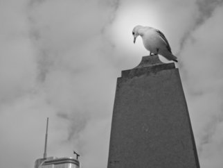 Nancy Bechtol: 'seagull and buildings II', 2013 Black and White Photograph, Animals. Framed at 16x 20