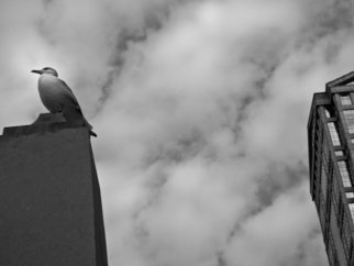 Nancy Bechtol: 'seagull and buildings III', 2013 Black and White Photograph, Animals.  bird, seagull, Chicago, river, buildings, black white, photo, nancy bechtol, stellarstatue purple ...