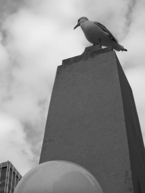 Nancy Bechtol: 'seagull and buildings IV', 2013 Black and White Photograph, Animals. bird, seagull, Chicago, river, buildings, black white, photo, nancy bechtol, stellarstatue purple...