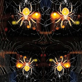 Nancy Bechtol: 'spider web mandala', 2019 Other Photography, Visionary. Artist Description: original photo highly manipulated with intentions of the all hallows eve.  celebrate the web of all.  includes frame...